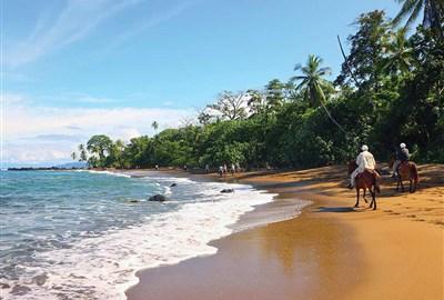 Stilla strandliv